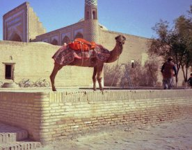 This Khiva camel seemed to smile but was ornery