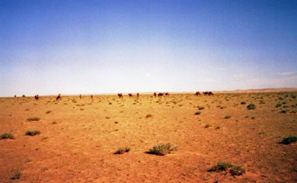 And saw camels