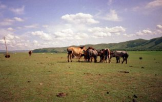 Mongol horses are meant to be relatively unchanged